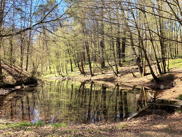 lake in the woods