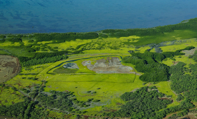 Ohiapilo Pond Bird Sanctuary