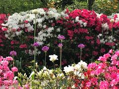 In Bloom at Sayen Garden