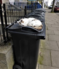 Pawsitively the best bin in the street