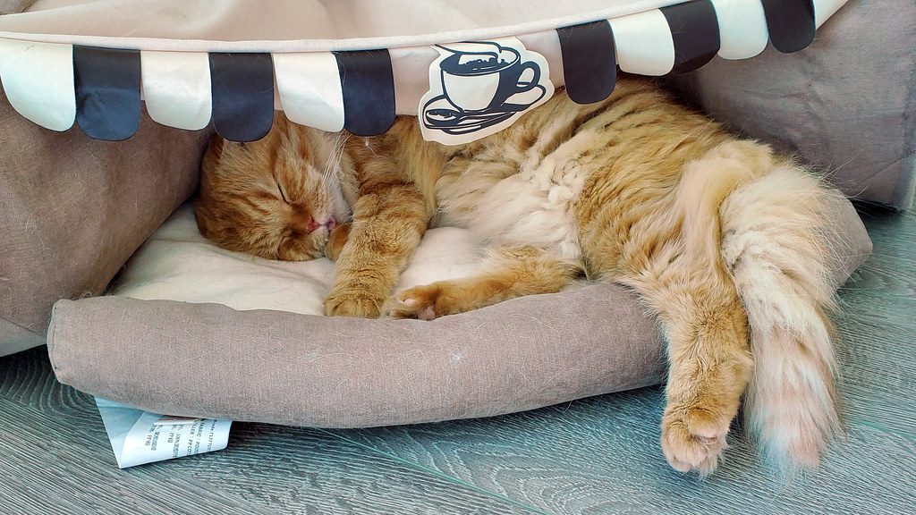 Pumpkin taking a nap with a smol blep