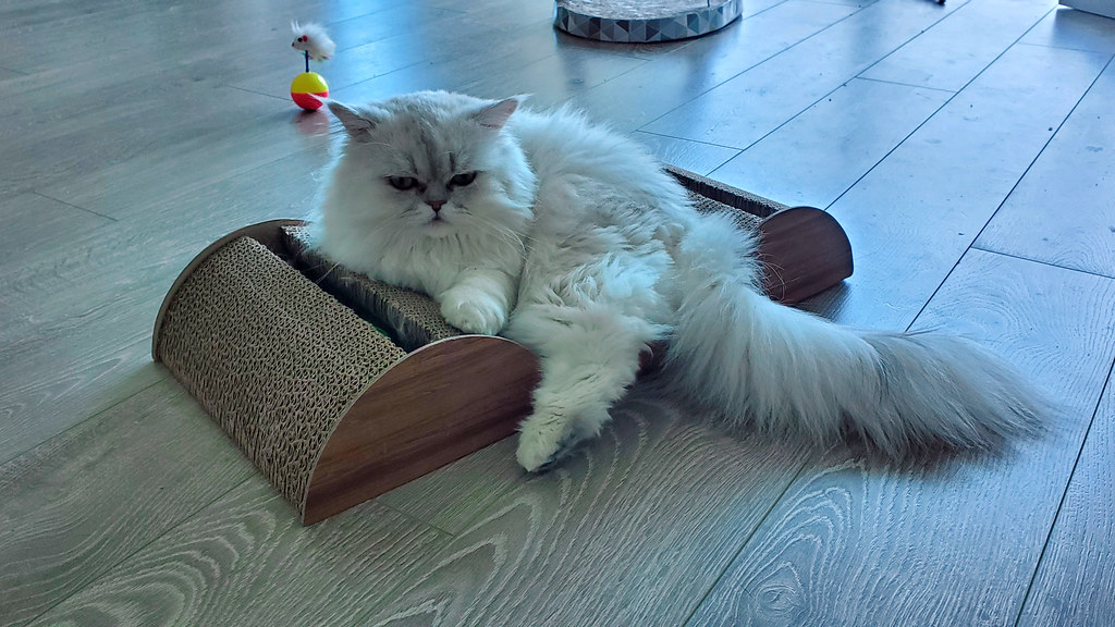 Pudding laying on his new scratching bed
