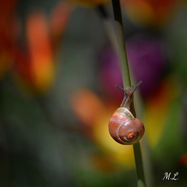Snail way