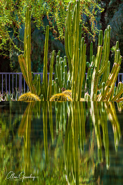 Sunnyland Reflections