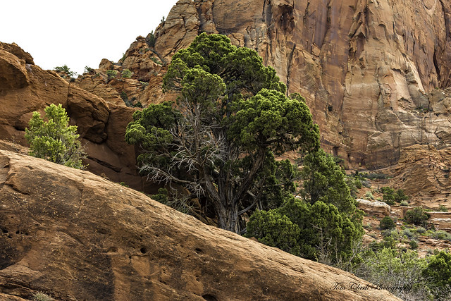At the base of Paria Point mountain in Kolob Canyons, Zion NP, Utah