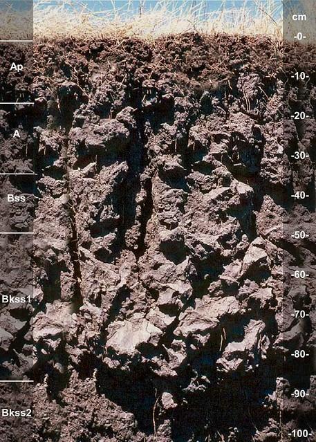 Slidell soil series TX