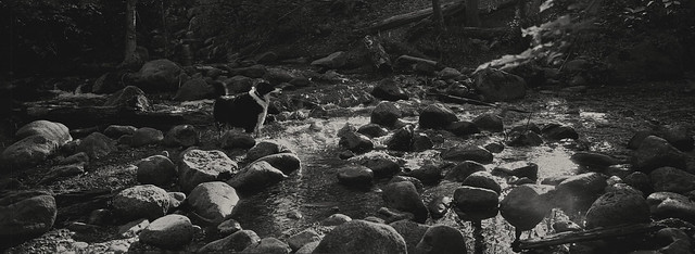 Creek - Film Hasselblad