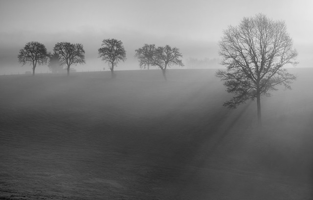 *light and shadow in the fog*