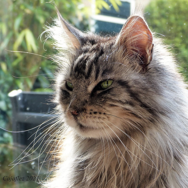 Floris: It is my birthday (11th of May). I am 15 years old now.