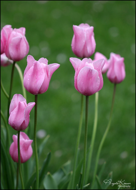 Perfect Pinks...
