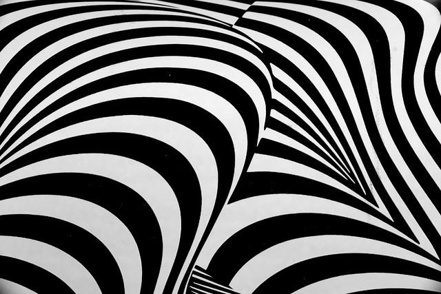 incoherent zebra 2