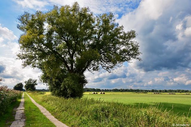 Landschaft bei Abickhafe / Ostfriesland