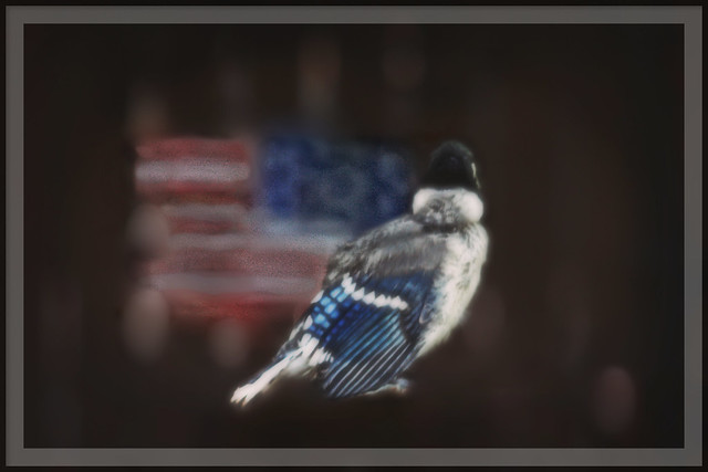 BLUE JAY: I Pledge Allegiance to the Flag of the USA