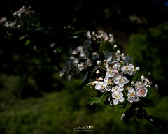 Naturshots - Serras do Porto - Maio 2021