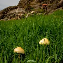 Naturshots - Geru00eas - Maio 2021
