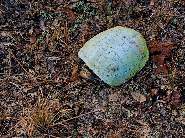Old turtle shell