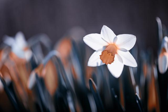 Spring awakened.