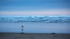 Cannon Beach May 2nd 2021-6352.jpg