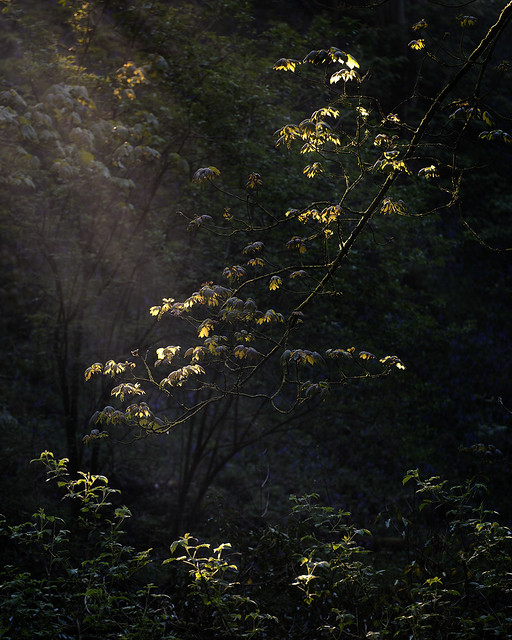 Woodland Light