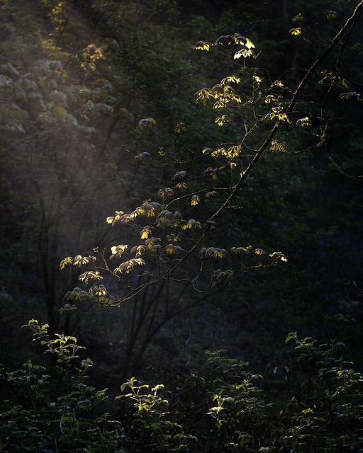 Woodland Light