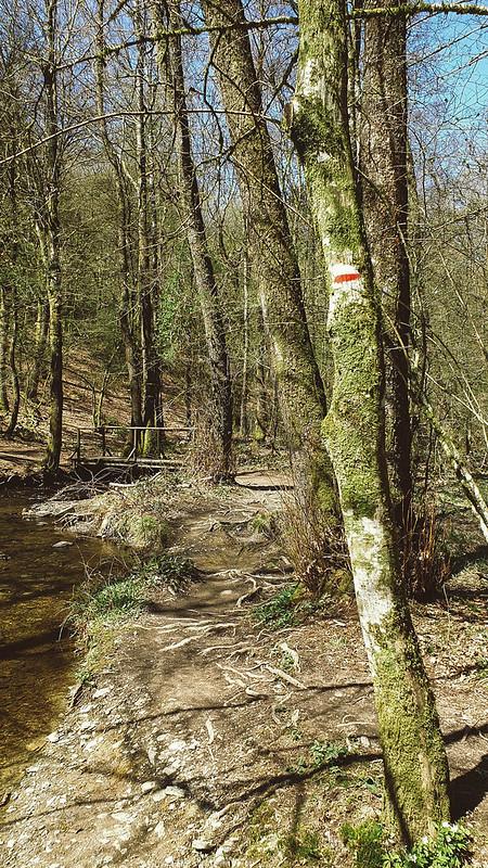 Ruisseau de Prévôt