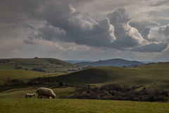 Sheep And Storm Clouds