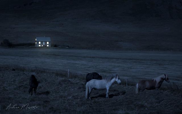 Vatnsnes (Iceland)