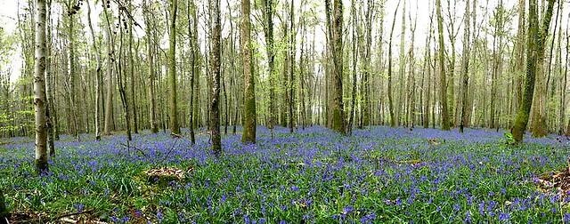 la forêt bleue - 2021