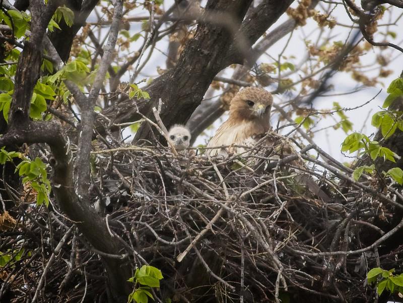 Mom and nestling