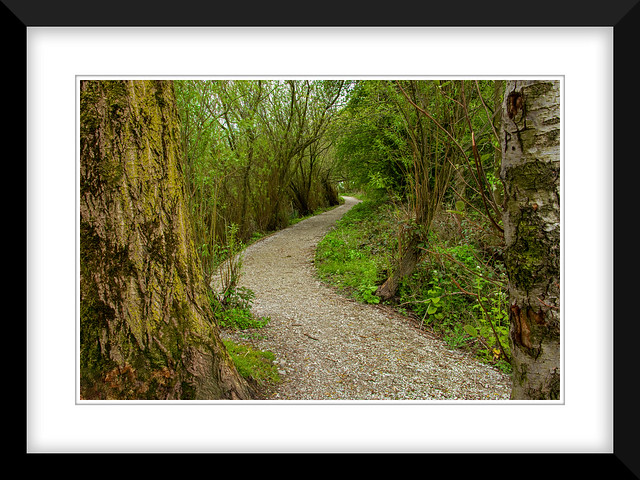 A Nature path to the Marsh