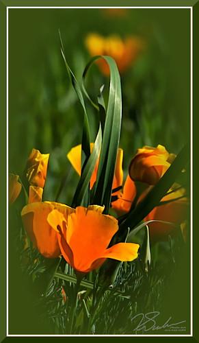 spring flowers folsom ca
