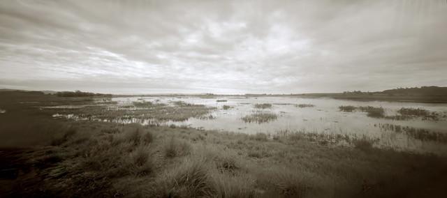 On Sepia Pond