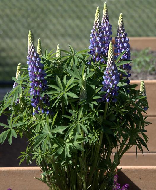 A Pretty Plant