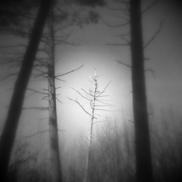 Edge of the Forest #6