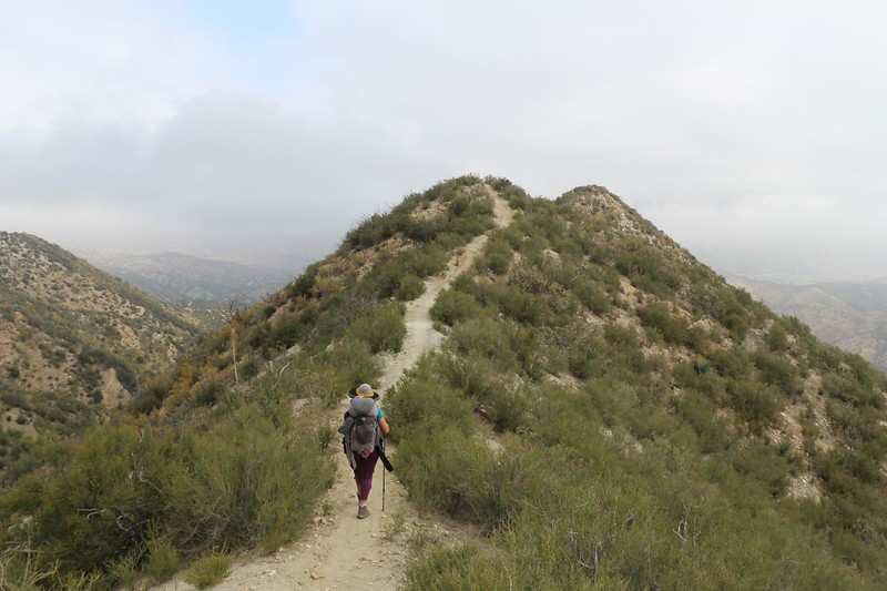 The PCT stopped traversing and began to follow a ridgeline and headed down into Mattox Canyon