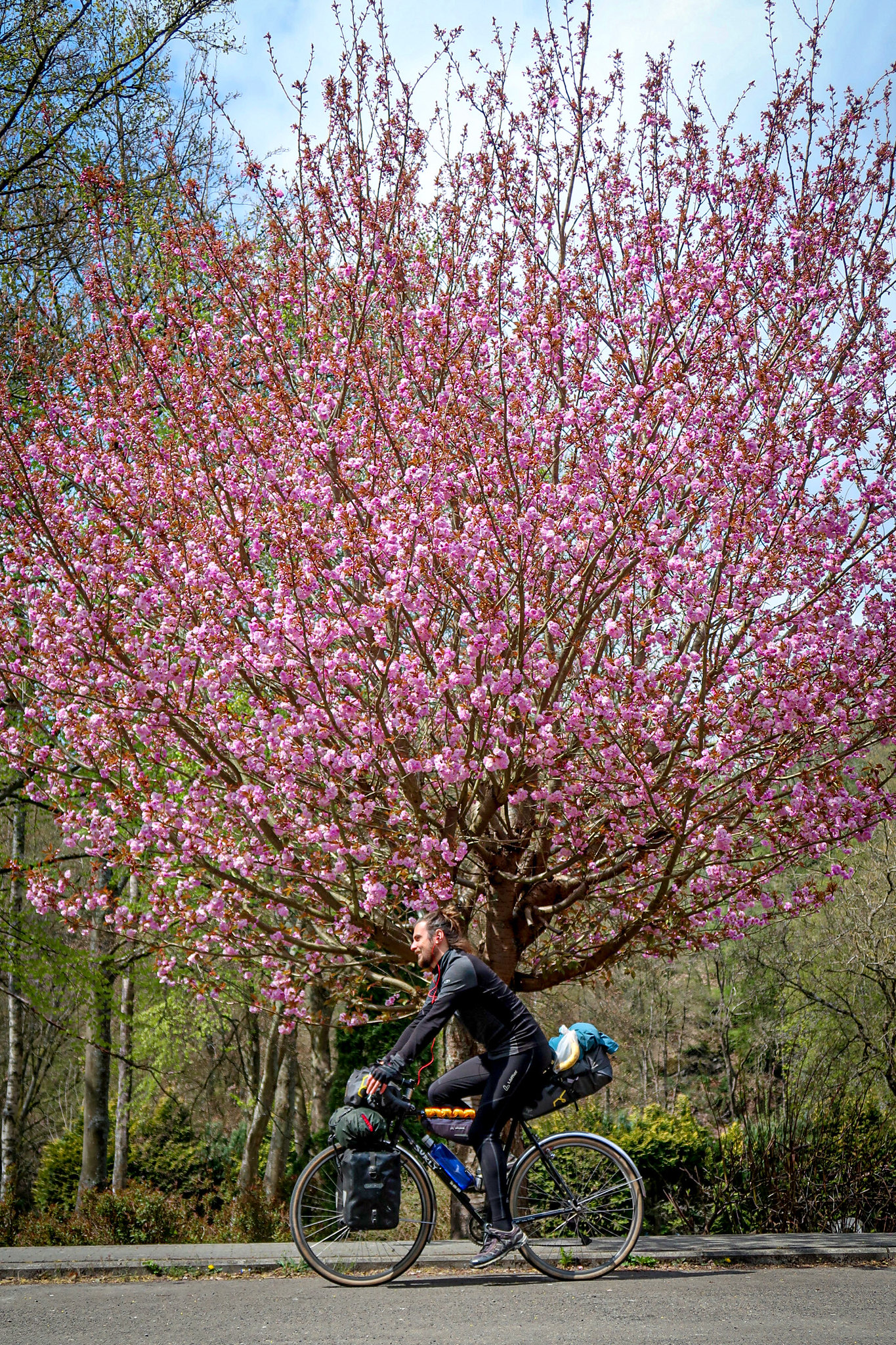 Cycling in blossom