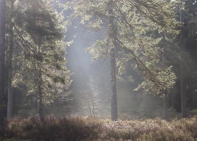 Sachsenrieder Forst