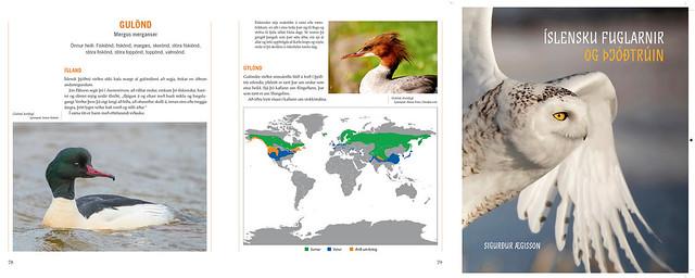 Goosander - Icelandic Birds and Folk Religion