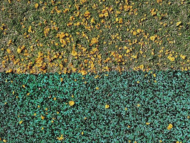 131/365: the grass is always yellower
