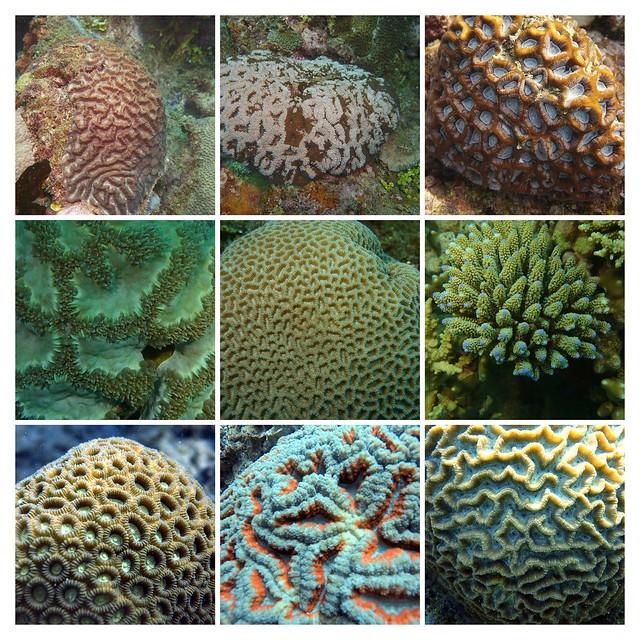 Mayotte's hard corals