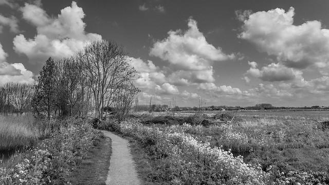 Midden Delfland II