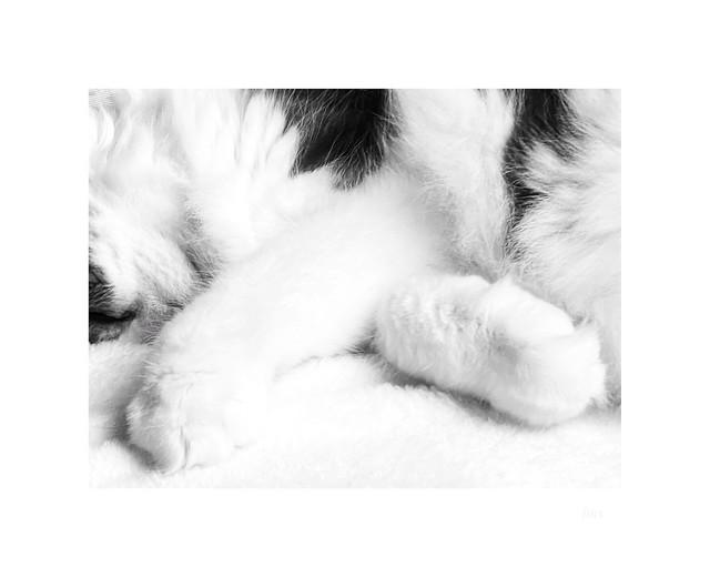 Bunny feet:)