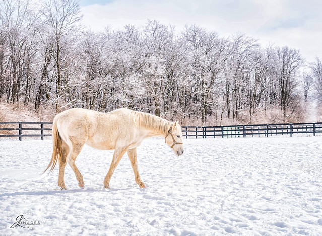 White Horse and Snow