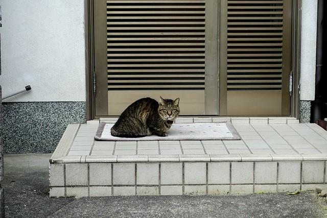 Today's Cat@2021−05−11