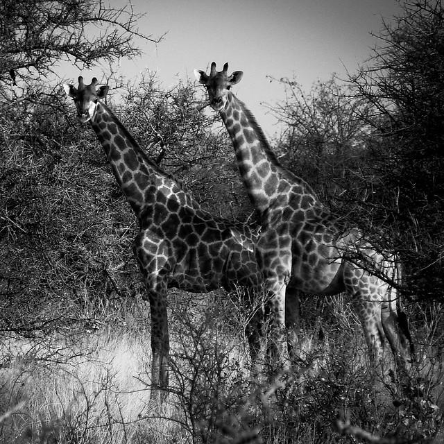 Les jumelles – Namibie