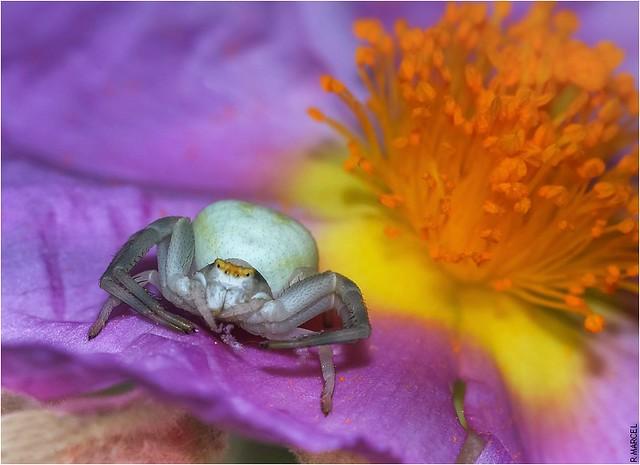 Belle fleur fatale/ Deadly  beautiful flower