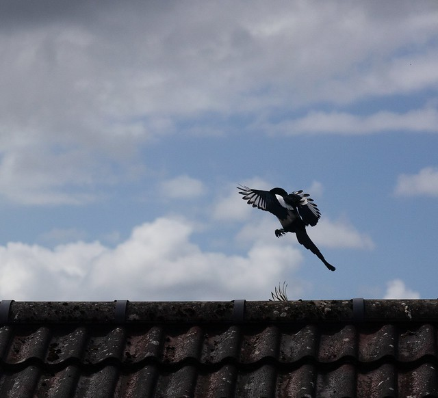 11-May-21_Magpie_Landing_0151