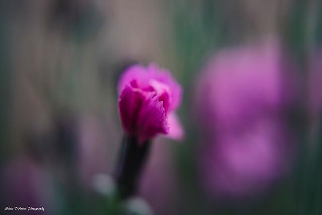 spring 235