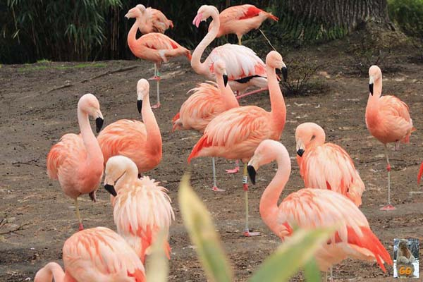 pinkbirds