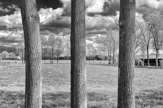Landschap nabij Liempde-